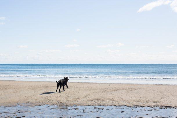 Biddeford Pool Dog Friendly Beaches