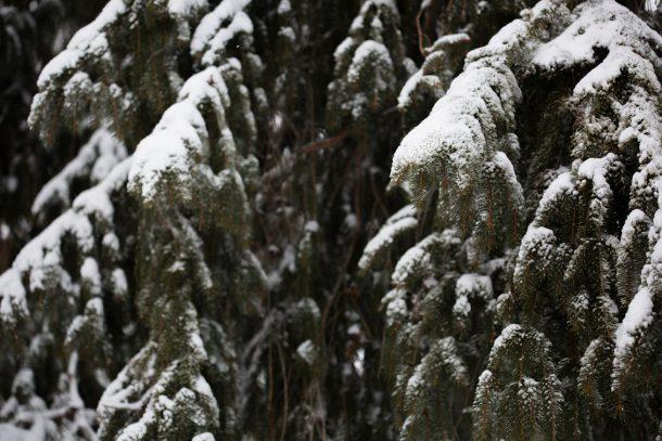 blizzard 2017