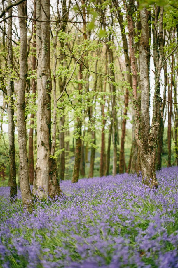 Bluebell Fields, Dorset Travel Guide by Map & Menu