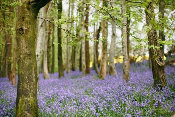 Blue Bell Fields, Dorset Travel Guide by Map & Menu