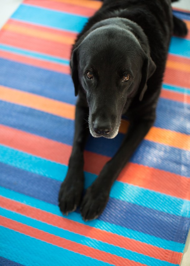 Dog-Friendly Lincolnville Motel featured on Map & Menu