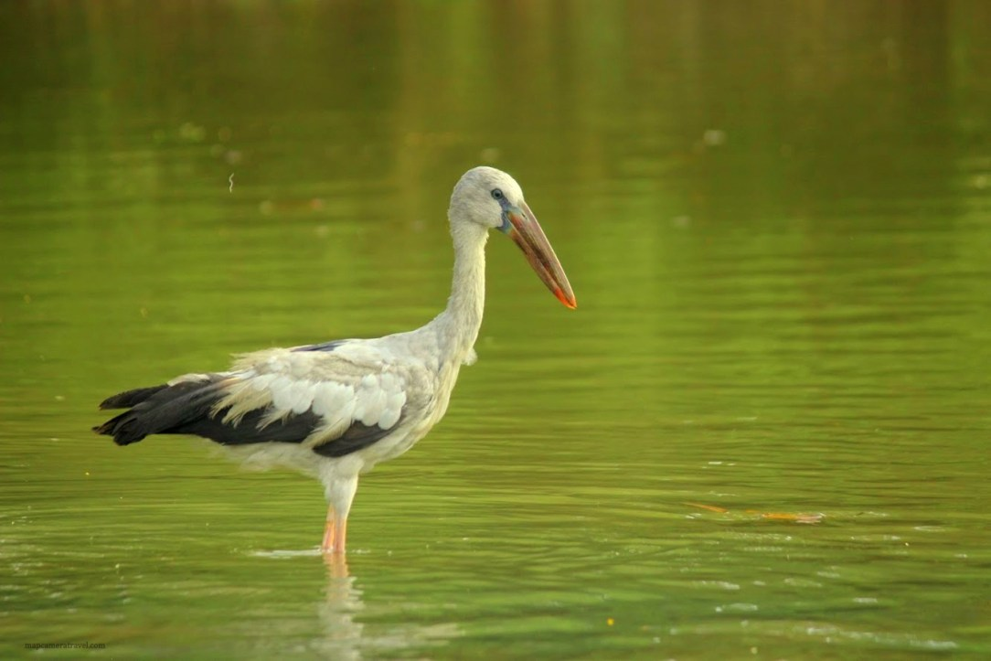 Poovar - Bird watching