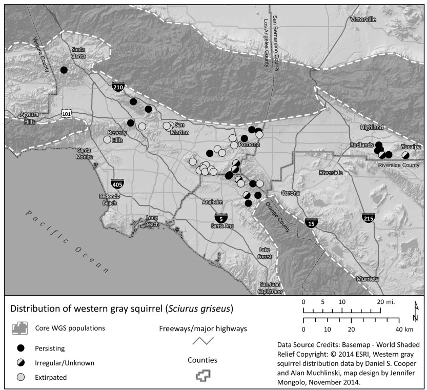 western gray squirrel distribution map