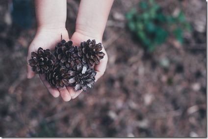 compter forêt