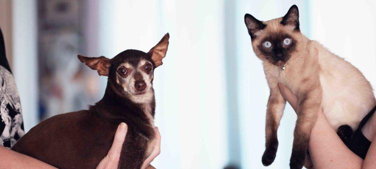 Un chien et un chat face à face.