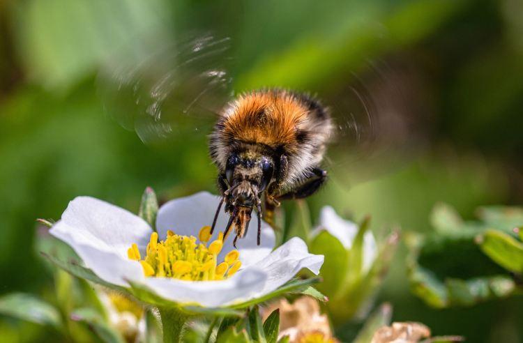 10 bonnes raisons de renoncer à vous battre : insecte volant au dessus d'une fleur