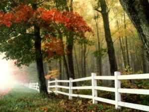 landscape romantic forest trees