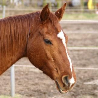 Fütterung älterer Pferde