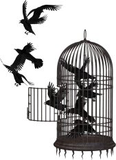 Birds flying out of a cage