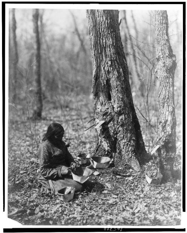 """""""Indian woman tapping maple sap""""; Reed, Roland, 1864-1934, photographer; 1908; courtesy of Library of Congress"""