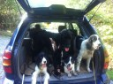 Hopped up in the car and ready to head home. Dulce, Tom, Zora, Lucy and Rosie in the way back
