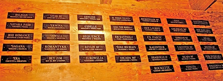 Wall of fame – horses that have graced our barn.