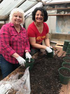 Plant Sale  Maplewood Garden Club