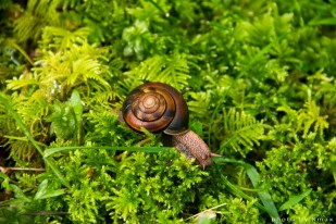 Oliver the Snail on Salt Spring Island