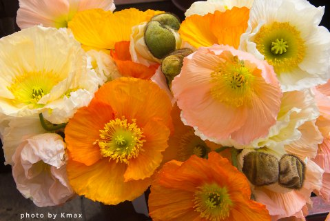 Poppies for Sale at the Salt Spring Saturday Market