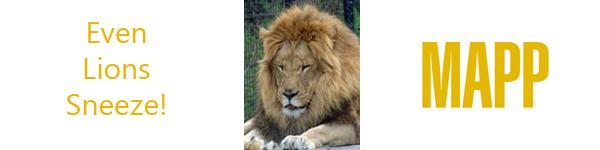 Even Lions Sneeze