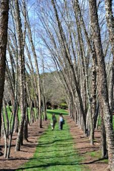 Beautiful paths to walk.