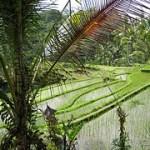 Eat Pray Love Bali travel guide