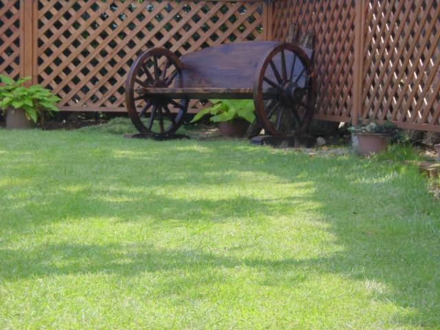 芝生のサッチング