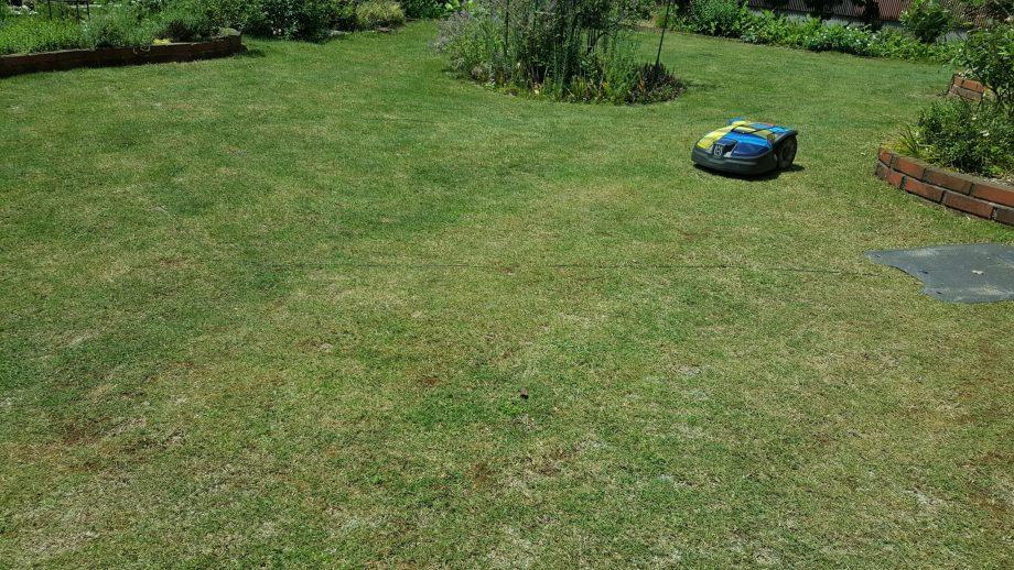 芝刈りバリカンでの芝刈りは大変