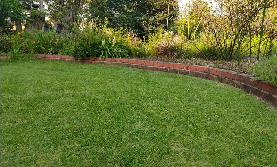 水不足で枯れた芝生はどれくらいで復活する?