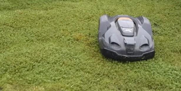 庭の芝生のお手入れ不要にする魔法の方法とは【ロボットにお任せ?】