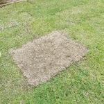 芝生が根付かない原因と対策【青い芽を出させる方法】