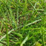 芝生の水切れサインを見落とすな!【対策方法あり】