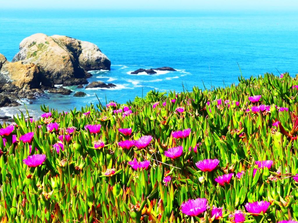 Blumenmeer San Francisco Meer