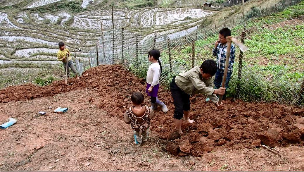Kinder arbeiten auf einem Feld in Sapa