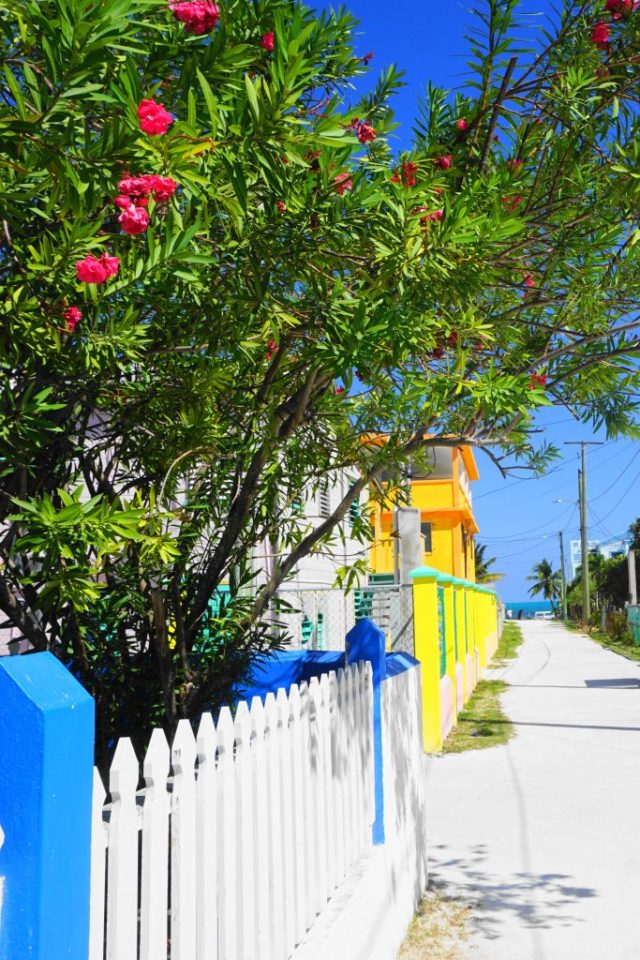 Wander - things to do in Caye Caulker