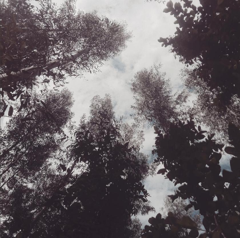 trees woods pisac
