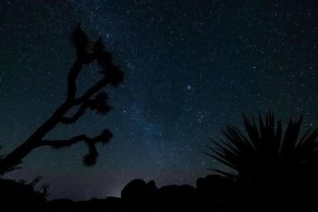 Joshua-Tree-Stars-Silhoute