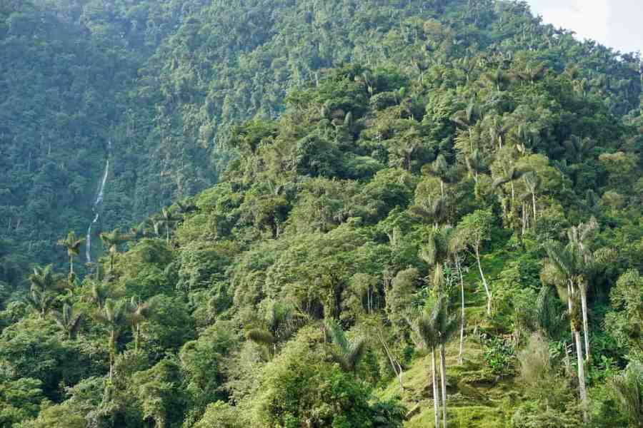 Lost-City-Trek-Columbia-Best-Hiking-in-South-America-miriam-eh-unsplash