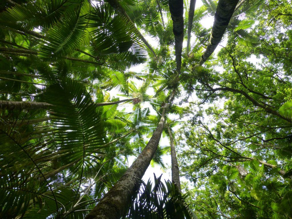 Hawaiian Tropical Botanical Garden on the Big Island