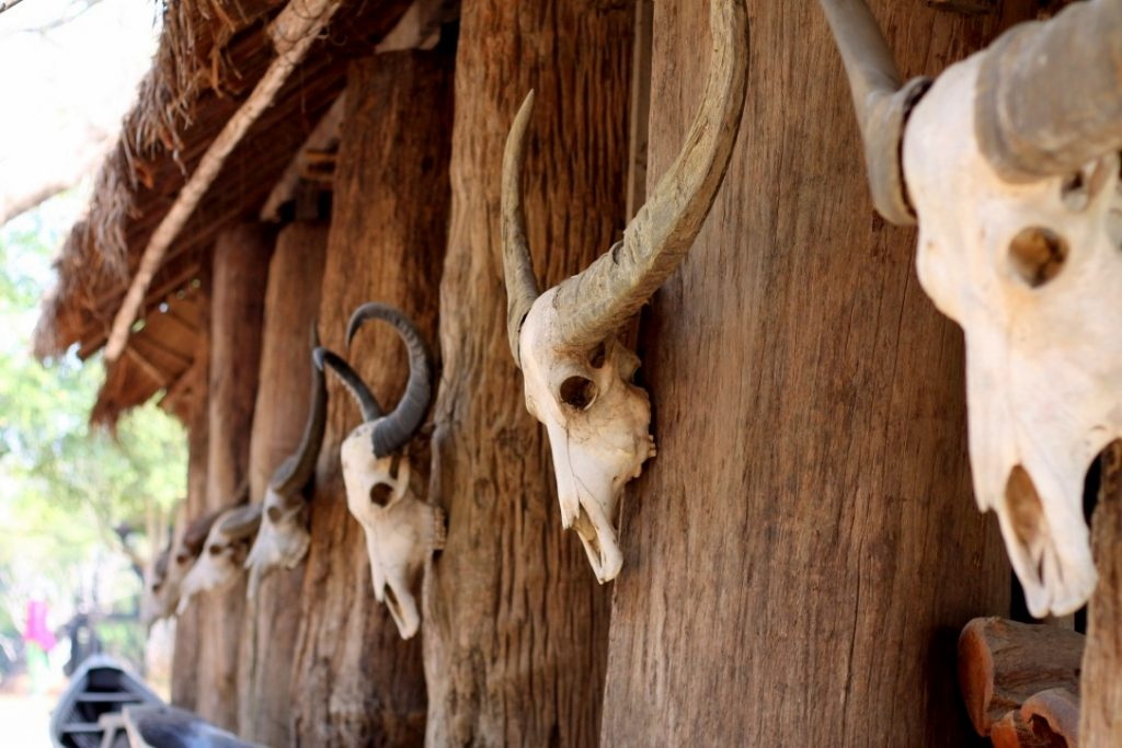Animal skulls at the Baan Dam - Black House Museum, Chiang Rai