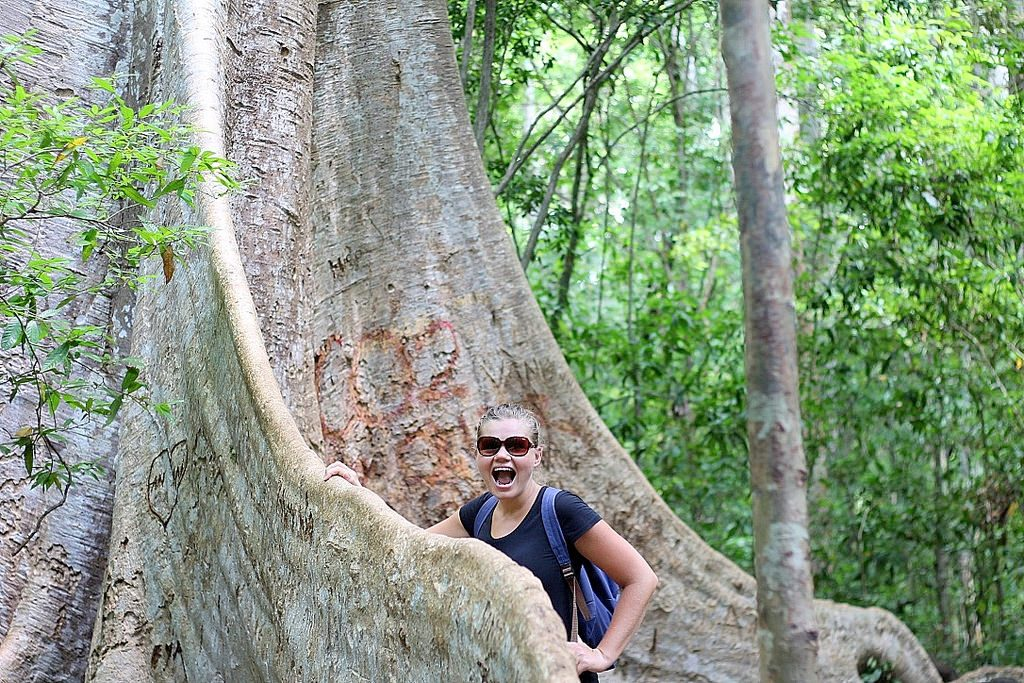 Cat Tien National Park - Tung Tree
