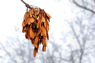changing-seasons-01 (8)