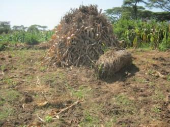 Fields and mulch