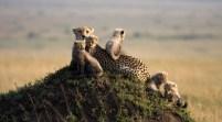 masai-mara-national-reserve