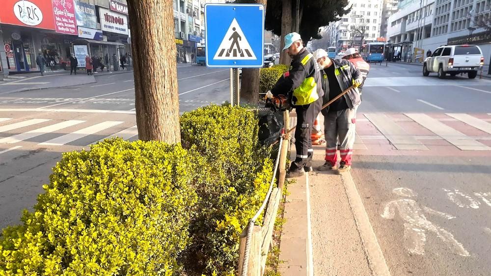 Kahramanmaraş'ta minyatür ağaçlar budanıyor