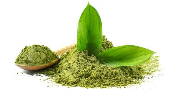 Chá verde emagrece mais que matcha?