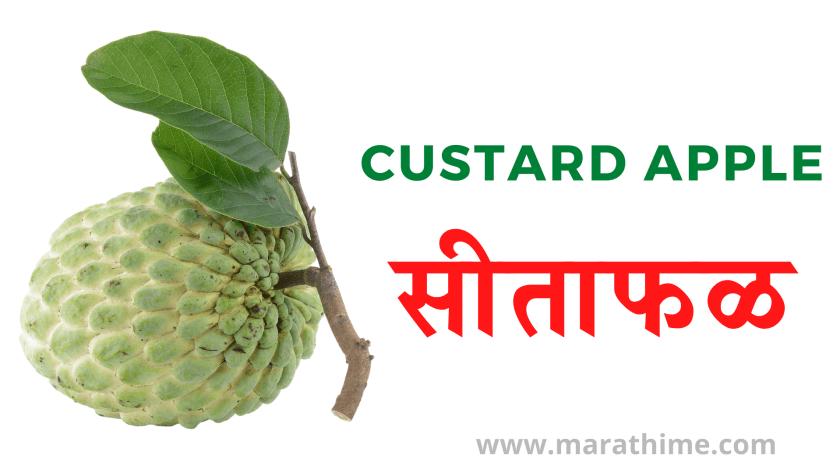 सीताफळ - Custard Apple