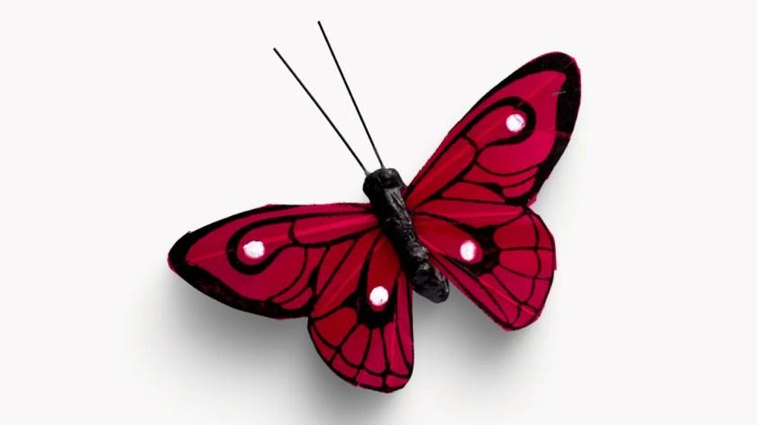 फुलपाखरू फोटो - Butterfly Photo