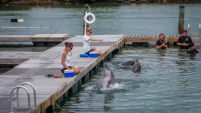 Dolphin Connection at Hawk's Cay Resort