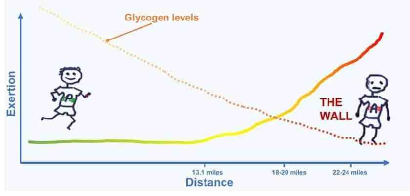 Exertion Glycogen marathon length