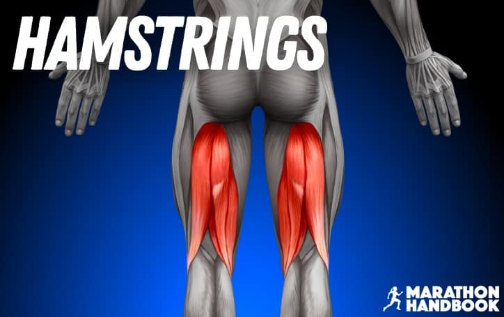 What Muscles Does Running Work Hamstrings