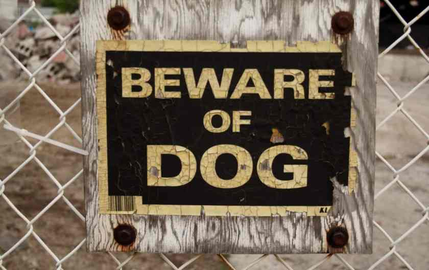 What To Do If You Encounter An Agressive Dog While Running