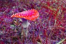 Psychedelic images (22)