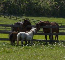 MarBill Hill Farm Horses
